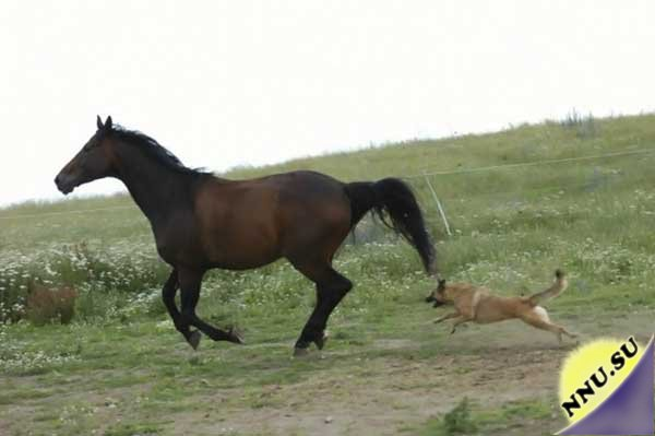dogs vs horses for aat The animal assisted therapy already has hundreds of members i take my dogs to work with me as well and in the past this has included rehab companies.